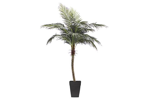8′ Palm Tree