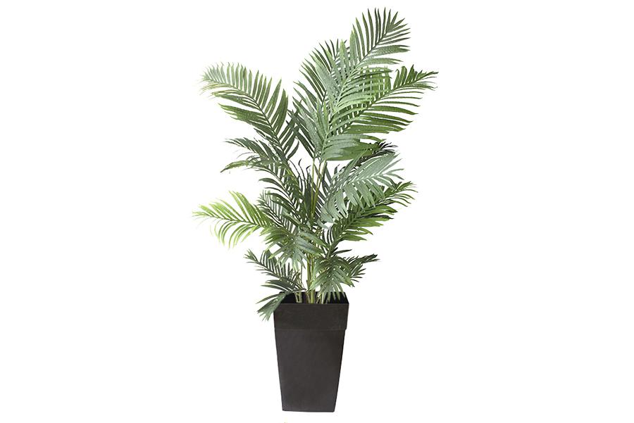 60″ Areca Palm Planter