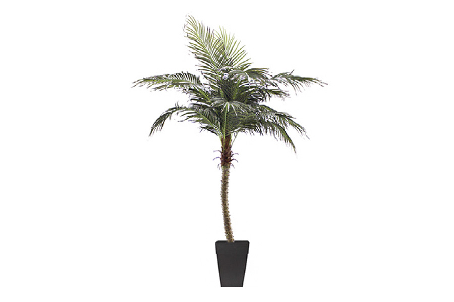8′ Phoenix Palm Tree Potted