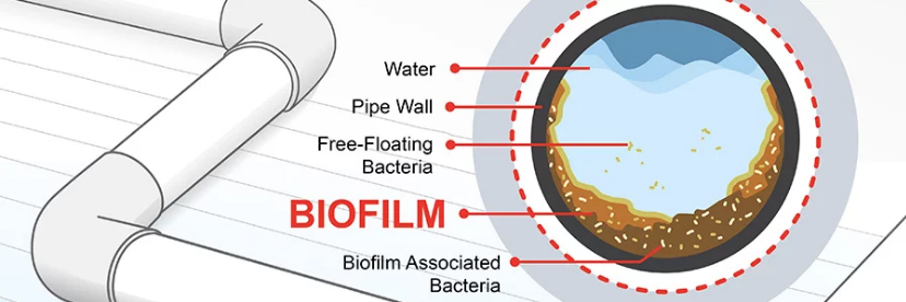 biofilm in pipe diagram for hot tubs