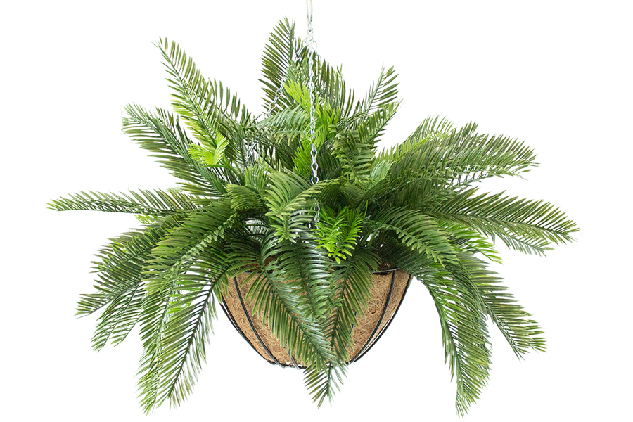 Hanging Basket Cycas Foliage Fern
