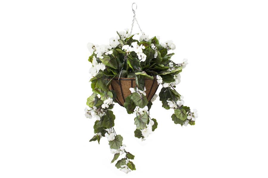 Hanging Basket White Geraniums