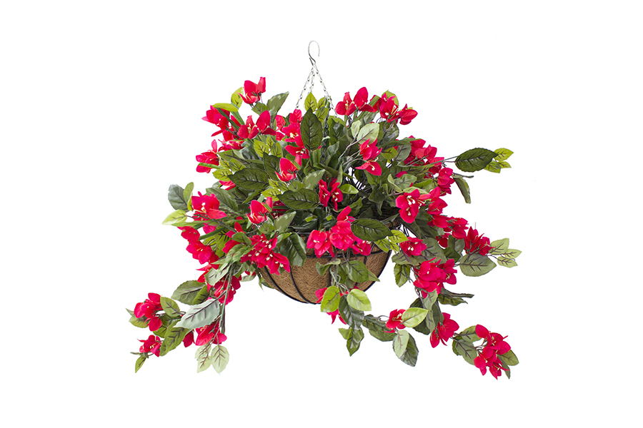 Hanging Basket Red Bougainvilleas