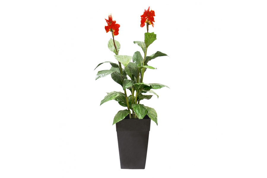 6′ Outdoor Planter Canna Red Flower
